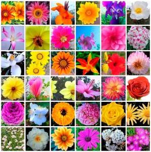 flors bach
